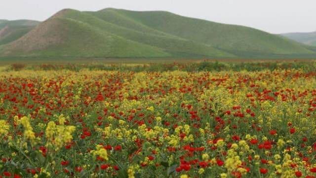 Visit rolling hills of Torkaman Sahra